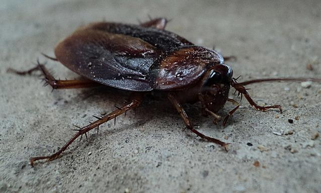 cockroach control in nepal